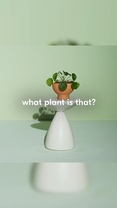 Latin Name: pilea peperomiodes Light: bright light Water: weekly Pet Friendly: Yes! Light Water, Water Lighting, Outdoor Planters, Garden Planters, Room With Plants, House Plants, Photography Tips Iphone, Coffee And Books, Garden Accessories