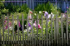 picket fence and flowers :-)