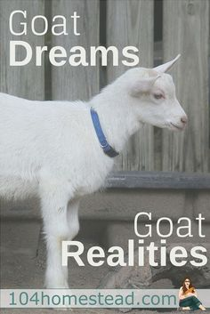 """""""Are goats worth it?"""" And to that one question, I can answer an unequivocal """"Yes."""" New skills are not won easily; they have to be earned.:"""