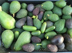 Eggplant, Fruit, Vegetables, Food, Vegetable Recipes, Eten, Veggie Food, Eggplants, Meals