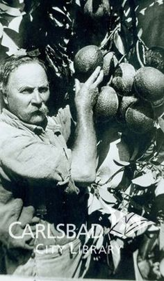 Carlsbad History Room: Sam Thompson, the 1st man to grow avocados (AKA alligator pears) in Carlsbad, 1928.