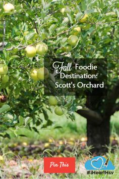 Fall Foodie Destination: Scott's Orchard. Hunting for crisp, juicy Appalachian Apples? Head to Scott's Orchard right here in Madison County!