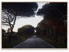 Art prints and design posters from top designers, artists and photographers. Brighton, Portugal, Photo Quality, Green And Grey, Country Roads, In This Moment, Art Prints, Paper, Photography