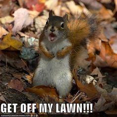 1000+ images about Lawn Care Memes on Pinterest | Lawn ...