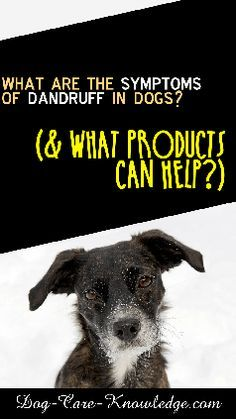 How To Get Rid Of Do How To Get Rid Of Dog Dandruff This Is A Super Easy Remedy That You Can Use At Home Which Will Leav Dog Dandruff Dog