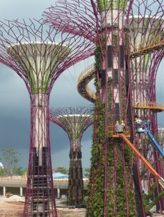 Super Trees. Horiculture project in Singapore. Eighteen trees, eleven are built w/environmentally sustainable materials. The trees will use solar energy. Architects: Wilkinson Eyre  and Grant Associates.