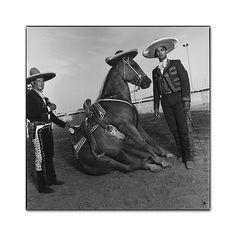 "Mary Ellen Mark - Portraits - Jose ""Pepe"" Diaz and son Jerry with their horse Grain of Gold, San Antonio, 1991 Mary Ellen Mark, American Odyssey, Rock Springs, Documentary Photography, Documentaries, San Antonio, Prints, Horse, Portraits"