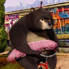 Madagascar Bear