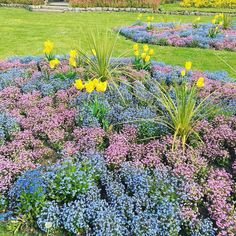 A Walk in the Park This morning we have had a wonderful walk in our local park. The gardeners do such an amazing job wth the flower beds. It was great to walk around and destress after a hard last week. #park #malpas #cornwall