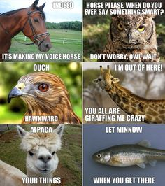 more clever animal humor - LOVE it!!