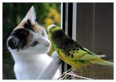 """Not Duck under Glass but....What""""s going on here? - Pixdaus"""