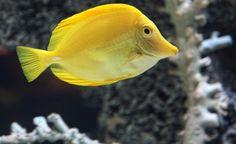 """This was taken in Mystic Aquarium in Mystic, Conn."" (From: 40 Unbelievable Underwater Snapshots)"