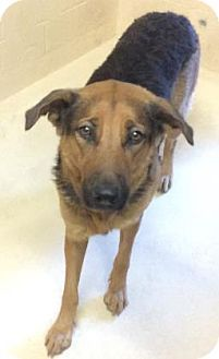 Rescue Me ID: 18-04-19-00235Shadow (male)