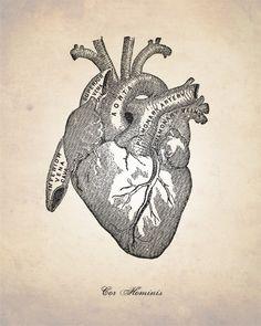 HUMAN ANATOMY HEART Art Print Antique by theNATIONALanthem