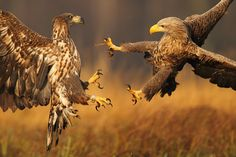 """Fight"" by Marcin Nawrocki"