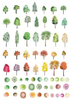Colour trees photoshop