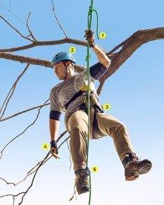 17 Best Arborist Educational images | Knot, Climbing, Knots