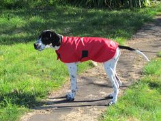 Chevy in his running rain jacket Running In The Rain, Dog Coats, Chevy, Rain Jacket, Dogs, Jackets, Animals, Down Jackets, Coats For Dogs