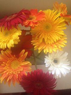 Love colours for bouquet