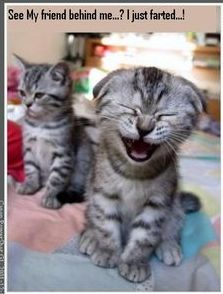 Cat Just Farted cute animals cat cats adorable animal kittens pets kitten funny quotes funny pictures funny animals funny cats funny jokes Funny Animal Quotes, Cute Funny Animals, Funny Animal Pictures, Animal Memes, Funny Cute, That's Hilarious, Funny Photos, Animal Humor, Monkey Pictures