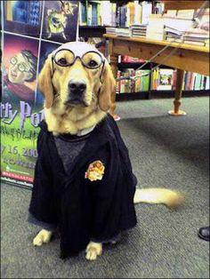 Cosplay Literario (13) ¡Los animales hacen magia! ~ Soñadores de Libros: Literatura Juvenil