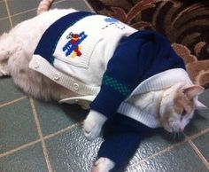 A collection of cats in costume, kitties wearing clothes, and other feline anthropomorphism! Funny Cats, Funny Animals, Cute Animals, Animals Images, Baby Animals, Fat Cats, Cats And Kittens, Fat Kitty, Kitty Kitty