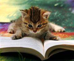 Будь котиком - читай книги!