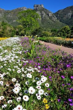 The colourful Kirstenbosch, Gardens, Cape Town South Afrika, Namibia, Cape Town South Africa, Most Beautiful Cities, Africa Travel, Land Scape, Botanical Gardens, Garden Design, Scenery