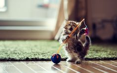 Ultimate collection of Cat Photos