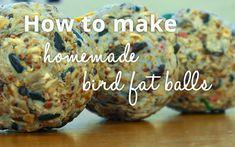 How to make homemade bird fat balls for winter