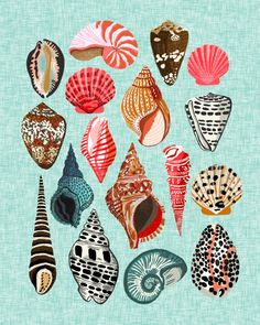 Seashells Illustration by Andrea Lauren  Art Print