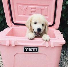 Imagen de dog, pink, and puppy
