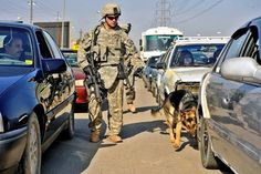 U.S. Army Staff Sgt. Joseph Branch inspects traffic with his partner, Nemo, in Ghazaliya, Baghdad, Iraq, Dec. 9, 2008. Branch, assigned to the 18th Security Forces Squadron, and fellow soldiers assigned to the 1st Infantry Division's 5th Cavalry Regiment team up with two U.S. Air Force Military Working Dog teams to search cars at Iraqi army check points. U.S. Air Force photo by Senior Airman Daniel Owen