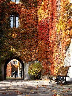 カナダ トロント Fall of Toronto, Canada The Places Youll Go, Places To See, Beautiful World, Beautiful Places, University Of Toronto, Canada Travel, Canada Canada, Borneo, Belle Photo