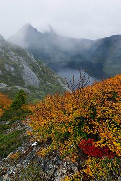 The peaks of Cradle Mountain shrouded in fog and the orange and red fagus looking their best due to the cold Autumny conditions.