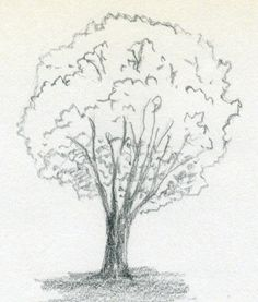 learning to draw a tree!