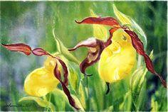 Yellow Lady Slippers by Joan A Hamilton Watercolor Mixing, Floral Watercolor, Lady Slipper Flower, Fruit Painting, Custom Canvas, Womens Slippers, Creative Art, Flower Art, Fine Art America