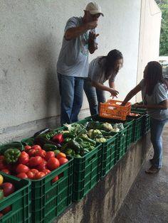 DECRESCIMENTO FELIZ - Menos Consumo, Mais Felicidade!: Alimentos para todos - Projeto reaproveita 10 tone...