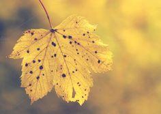 Autumn leaf by Cazador de sueños on Creative Market