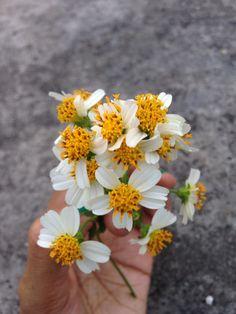 Floralove
