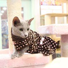 Vestido diseño de puntos polka para gatita