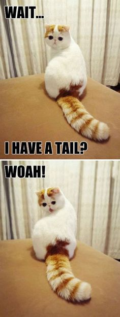 Fun Claw - Funny Cats, Funny Dogs, Funny Animals: Funny Animal Pictures With Captions - 37 Pics and like OMG! get some yourself some pawtastic adorable cat apparel! Animal Captions, Funny Animal Memes, Cute Funny Animals, Funny Animal Pictures, Cute Baby Animals, Cat Memes, Funny Cute, Super Funny, Super Cute Animals
