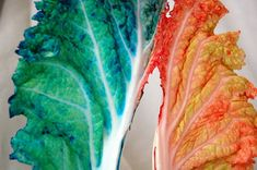 Kindergarten xylem water movement demonstation with napa cabbage and dyed water - 9 Preschool Science Activities, Science For Kids, Craft Projects For Kids, Diy For Kids, Kids Crafts, General Biology, Water Movement, Easy Science Experiments, Napa Cabbage