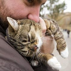 lil bub loved by her human dad
