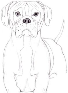 How to Draw a Dog: Boxer