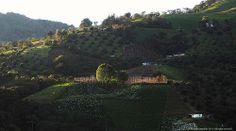 Cultivo de flores y aguacate Sonson Antioquia Colombia