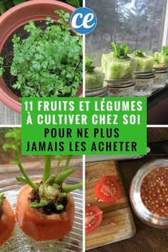 11 Fruits et Légumes Que Vous Ne Devriez Acheter Qu'une Seule Fois Dans Votre Vie Si Vous Connaissez Ces Astuces. Container Gardening Vegetables, Succulents In Containers, Planting Vegetables, Container Flowers, Container Plants, Growing Vegetables, Fruits And Vegetables, Vegetable Gardening, Gemüseanbau In Kübeln