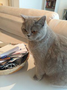Hi!!!! I'm Charlotte 😺 #SoCute #Petitticos #LoveCat Charlotte, Cute, Animals, Pictures, Animales, Animaux, Kawaii, Animal, Animais