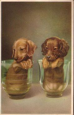 Pies Dog Hund Jamnik Jamniki Dachshund Dachshunds ca 1950 Weenie Dogs, Dachshund Puppies, Dachshund Love, Cute Puppies, Cute Dogs, Dogs And Puppies, Doggies, Teacup Puppies, Daschund