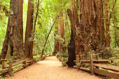 muir woods san francisco also see http://gocalifornia.about.com/od/camarincounty/a/muir-woods.htm